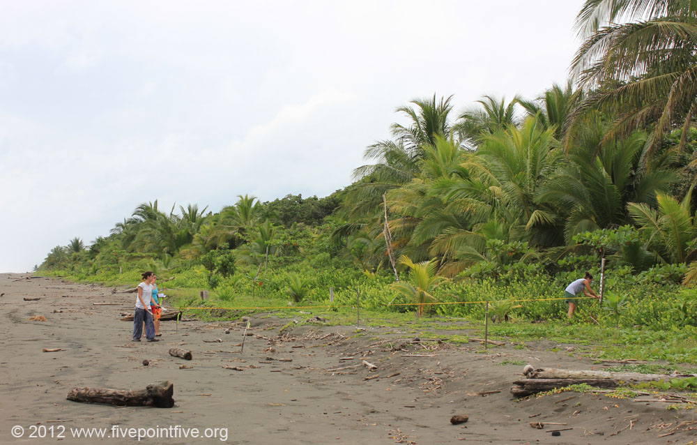 Volunteers marking nests to monitor their progress