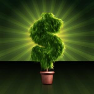 How big is your money tree?