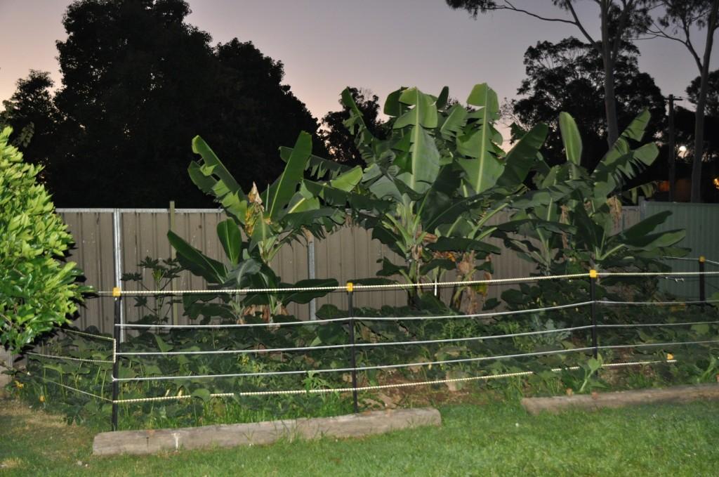 Breakthrough Houses vegetable garden