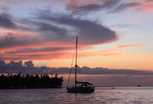 Sailing Koala - Nacar