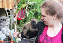 Volunteer plays with orphaned baby monkey at Merazonia