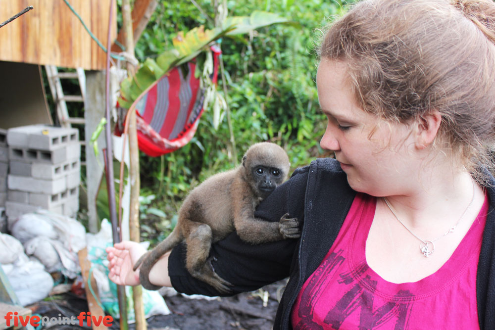 Volunteer plays with orphaned baby monkey at Merazonia - Ecuador