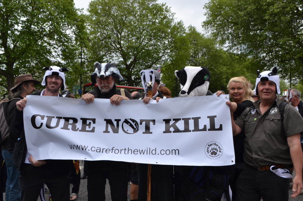Demonstration march for badgers