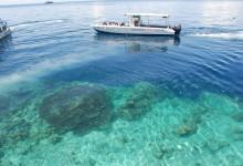 Diving Sipidan