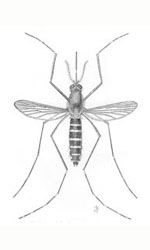 Malaria tablets