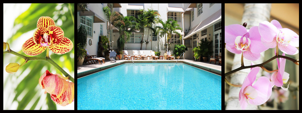The pool at The Betsy Hotel - South Beach