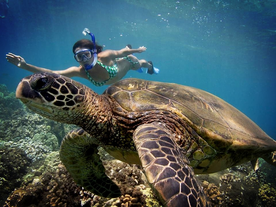 Angela free diving with the turtles in Maui. Photo credit: Don McLeish