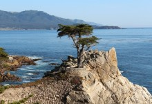 17 Mile Drive: The Lone Cypress