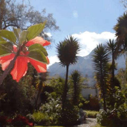Posada Del Quinde Hotel, Ecuador