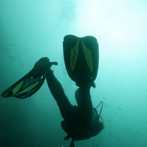 Scuba Diving Review, The Galapagos Islands