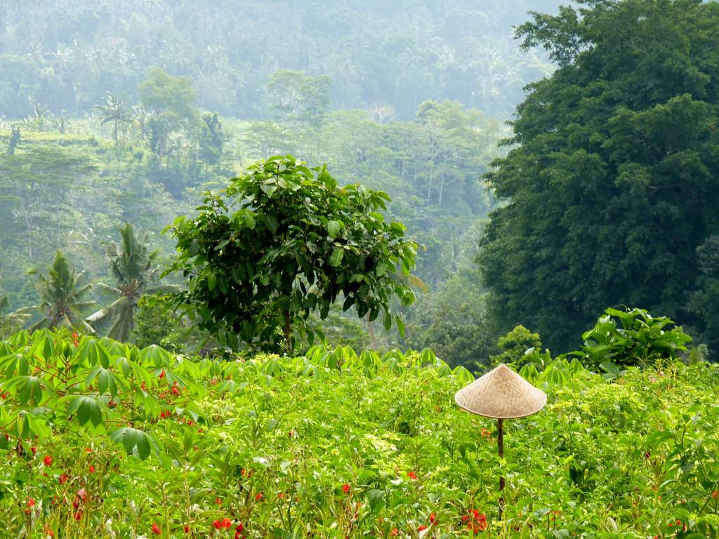 Sideman - Land of farmers