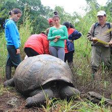Giant Tortoise Conservation, Galapagos Islands