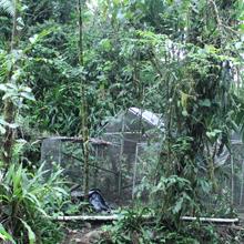Animal Wildlife Rescue Merazonia
